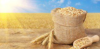 Taranto. Convegno sul grano duro di livello nazionale