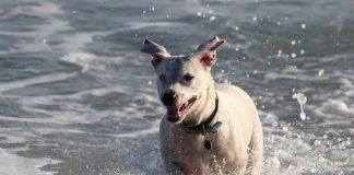 Il Consigliere vuole fare in modo che possa esserepermesso l'accesso degli animali domestici in spiaggia.