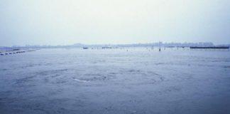 Taranto. Inquinamento del Mar Piccolo
