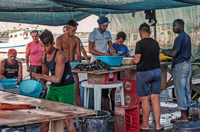 I cozzari di Taranto
