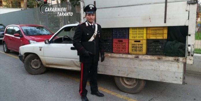 Arrestati ladri di olive a Palagiano colti in flagranza di reato