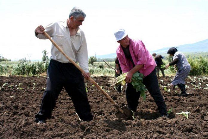 Bando per lavoratori aziende agricole con sede in Provincia di Taranto