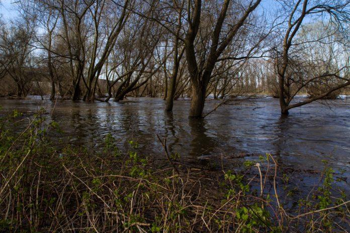 Contributo a favore della Riserva naturale Palude La Vela di Taranto