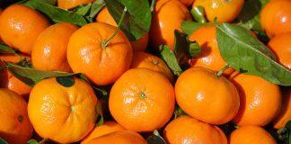 A Palagiano buona l'annata degli agrumi ma non basta