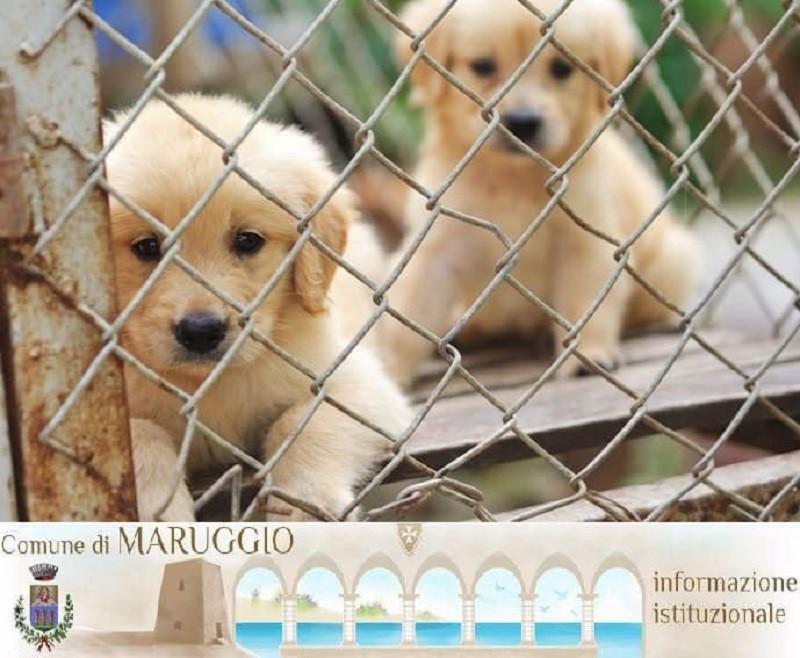 Esenzione Tari a Maruggio per chi adotta un cane