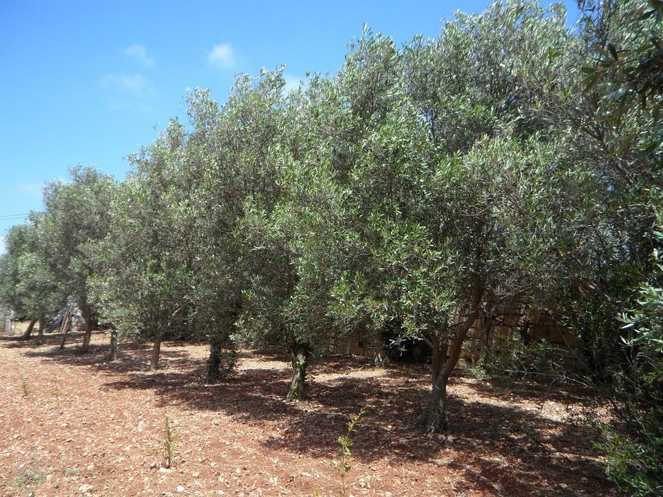 A Castellaneta incontro con Cia Agricoltori italiani Puglia