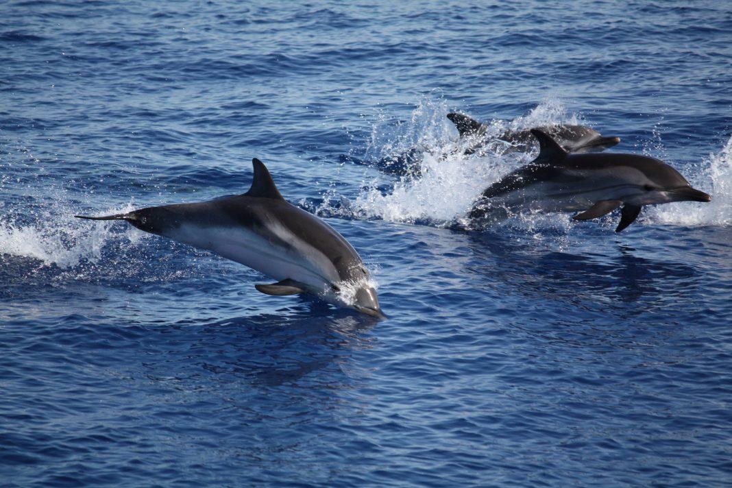 Duecento delfini nel mare di Taranto