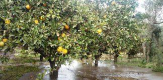 """Palagianello: """"aiuto"""" per gli agrumeti i più colpiti dalle intemperie"""