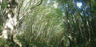Bosco delle Pianelle - Martina Franca-iltarantino