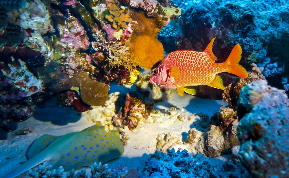 Scoperta barriera corallina nelle acque della Puglia