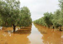 Danni seri per il maltempo all'agricoltura tarantina