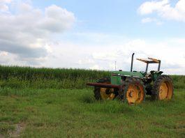 Bando rivolto ai piccoli imprenditori agricoli di Lizzano