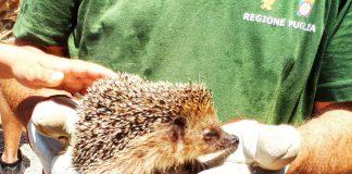 Bosco Cuturi di Manduria. Rilasciati 50 esemplari di animali