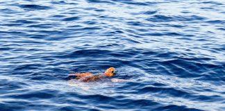 Sub ha trascinato tartaruga verso la riva a Ginosa Marina
