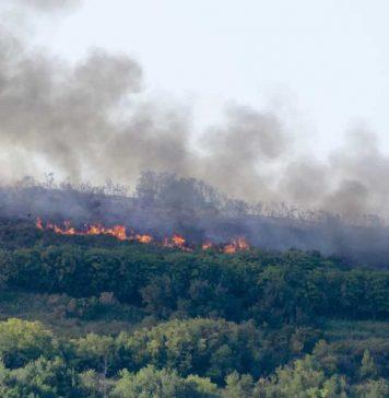 Vasto incendio scoppiato nel parco di Punta Pizzo di Gallipoli