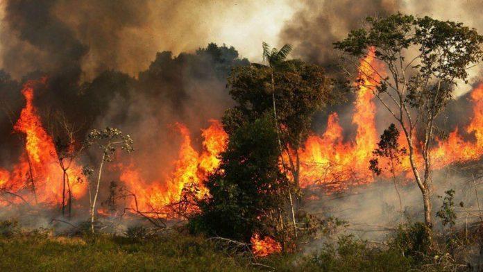 Amazzonia in fiamme. E' un problema globale