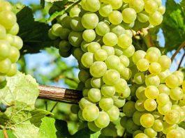 Primitivo di Manduria secondo nella lista dei vini italiani