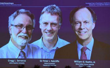 Nobel per la Medicina 2019 a Kaelin, Ratcliffe e Semenza