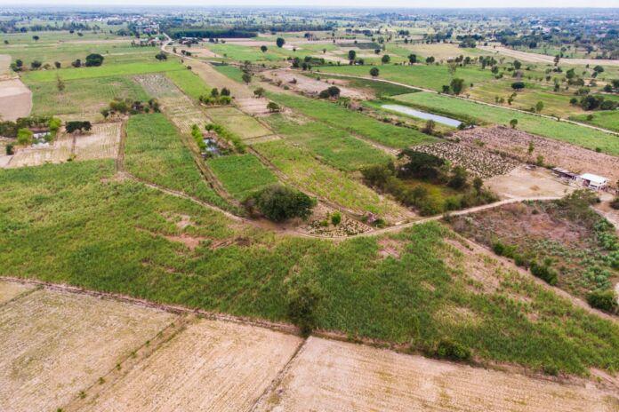 Taranto, agricoltura, siccità