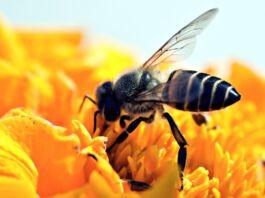 Api tutelate a Maruggio vietando l'uso di pesticidi