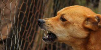 Muore ad Andria l'uomo morso da un cane
