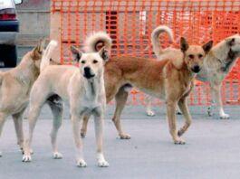 Pulsano, Di Lena: in aumento le aggressioni da parte dei cani randagi