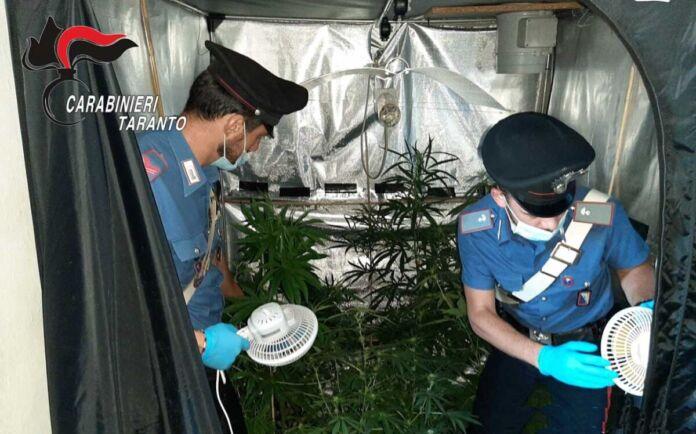 Statte: coltivavano cannabis in Masseria. 2 arresti