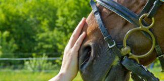 cavalli ippoterapia crispiano