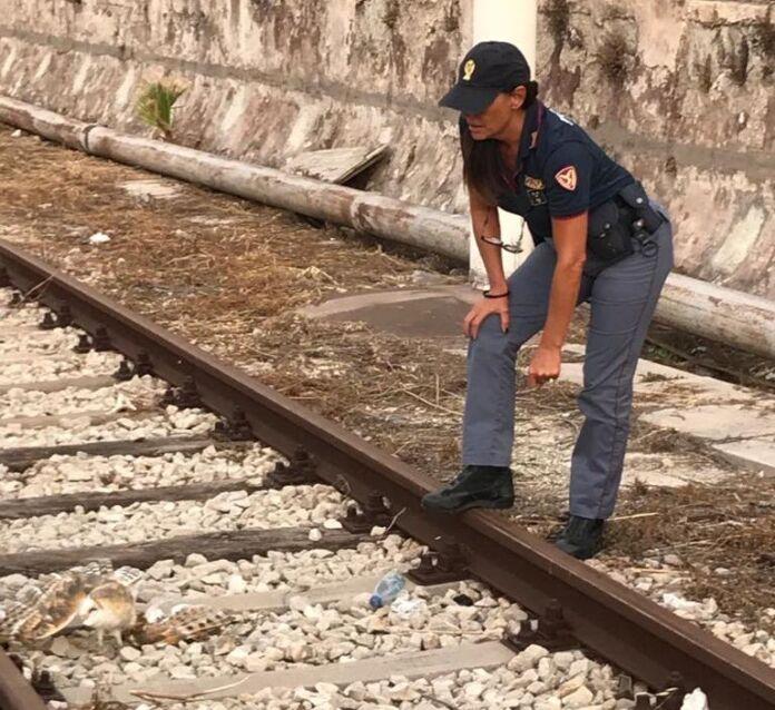 poliziotti salvano barbagianni