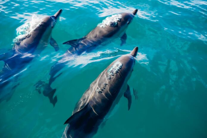 Taranto: firmato protocollo d'intesa sui delfini