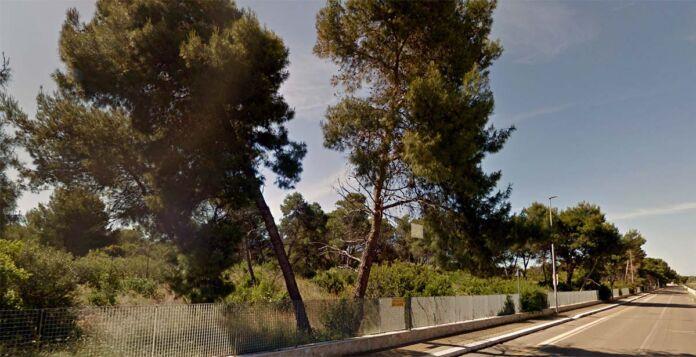 Marina di Ginosa: al via iter concessione Arco Pineta Regina