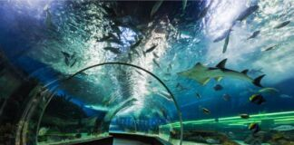Acquario di Taranto: un progetto green da 50 milioni di euro