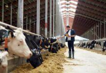 Imprese agricole in Puglia