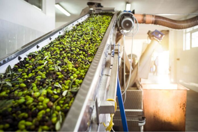 Campagna olearia pugliese 2020: produzione in calo