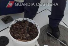 sequestrate 80 kg cetrioli di mare Oloturie Mar Grande Guardia Costiera Taranto