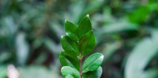 Verde Amico Taranto