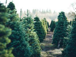 alberi di natale a castellaneta