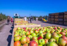 Coldiretti Puglia export agricolo numeri da record