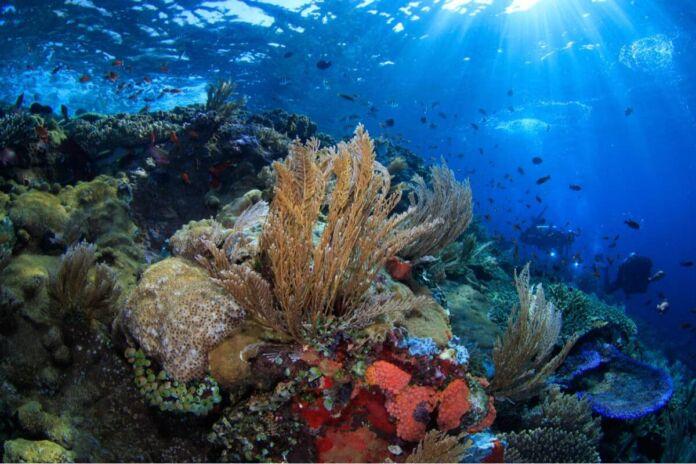 Manduria progetto Parco Digitale subacqueo