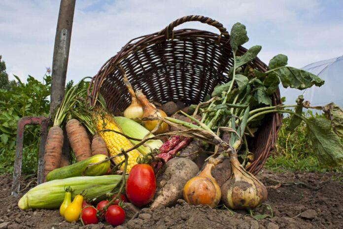 agricoltura biologica