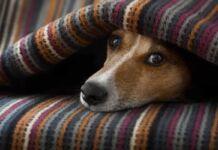 coperte per cani