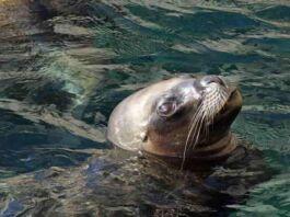 foca monaca Puglia