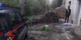Palagianello: arrestato per furto di legna