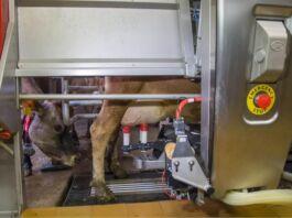 settore lattiero caseario