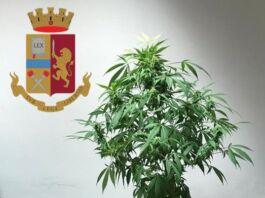 spaccio di marijuana grottaglie
