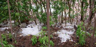 aziende agricole neve ghiaccio