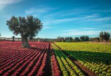 Taranto: contributo a fondo perduto per agricoltori