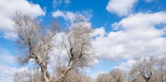 Xylella in Puglia: approvato piano 2021 per combatterla