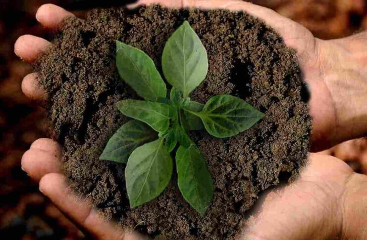 just sostenibilità