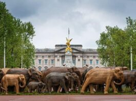 Londra sculture di elefanti campagna CoExistence